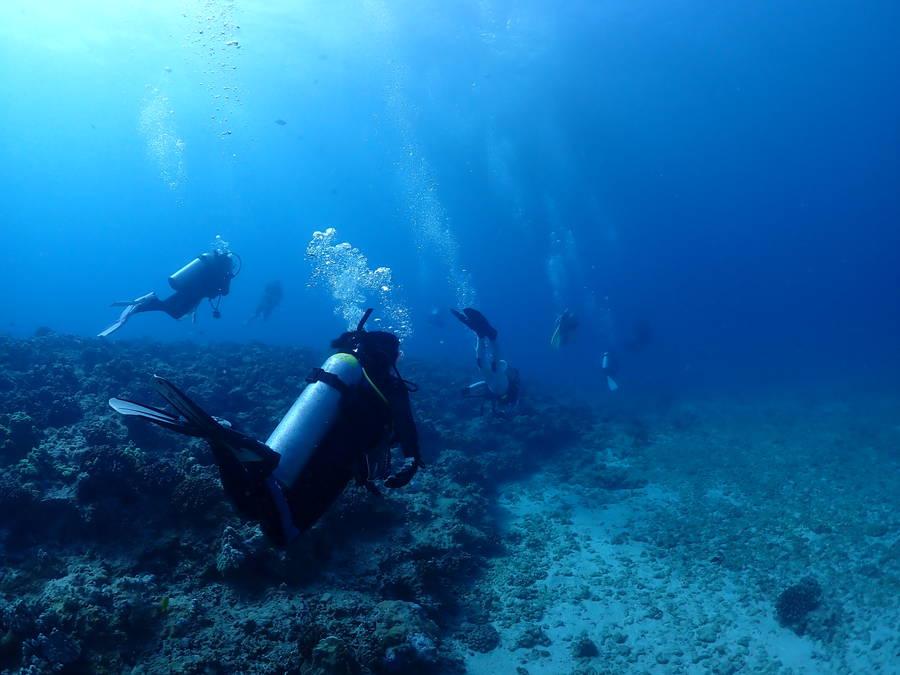 ハワイに着きました、ダイビングをなぜするのか?